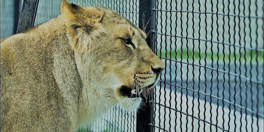 Сафари-парк на Арабатской стрелке откроется на майские праздники
