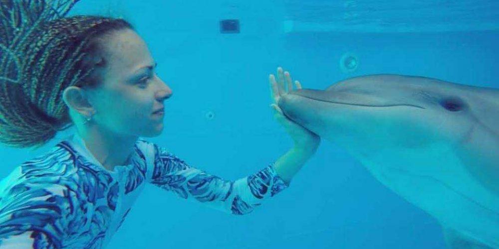 Лучшее шоу дельфинов на Арабатской стрелке ждет вас!