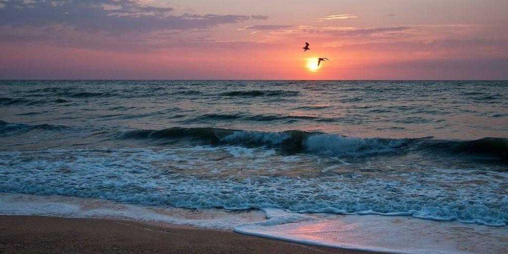 Азовские водоросли: море самоочищается!