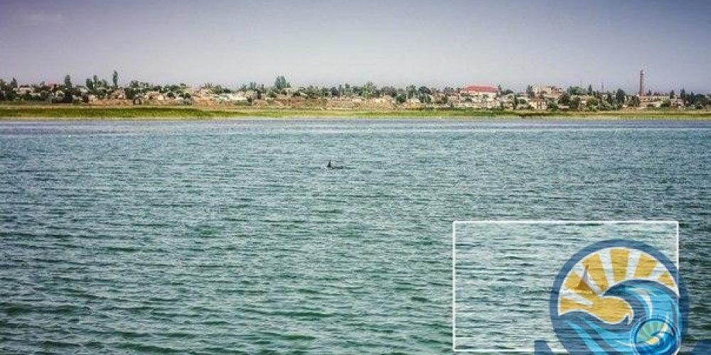 В Геническе зафиксировали дельфинов, которые резвились у берега. ВИДЕО